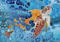Orange Turtle (Detail)
