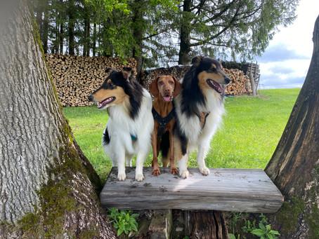 Das Wandern ist der Hunde Lust...