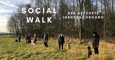 Socialwalk.png