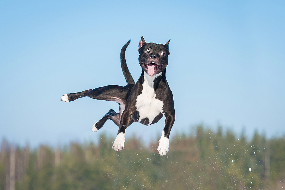 crazy dog compressed