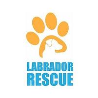 labrador, dog trainer, dog rehabilitation, dog training dog boad and training
