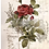 "Thumbnail: Botanical Rose (24""x 30"") Transfer"