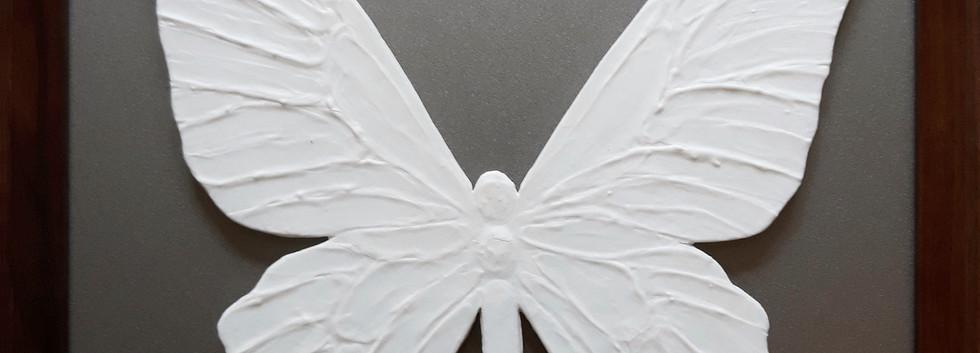 Бабочка белая