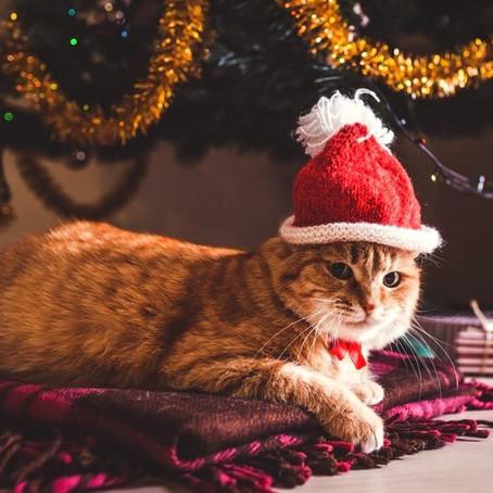 Covid y Navidad: ¿cómo comunicar?