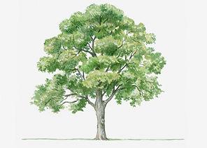 160422_SCI_tree.jpg.CROP.promo-xlarge2.j
