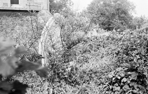 Overgrown headstone before clearing.