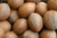 coconut-1771527_1280.jpg