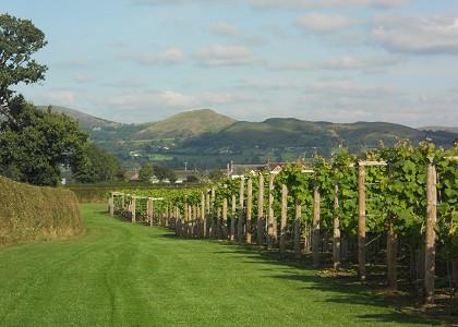 Kerryvale Vineyard