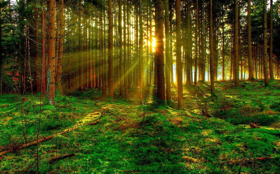 treeray.jpg