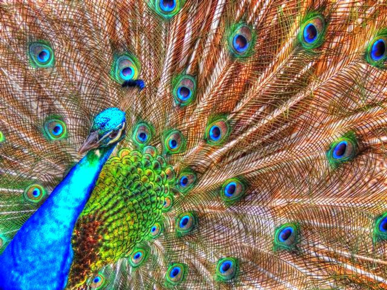 animalityweb.jpg