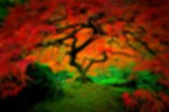 treerainbow.jpg