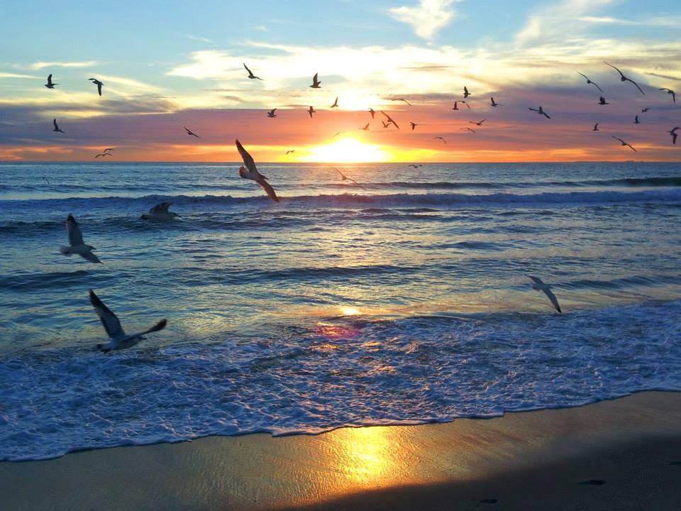 seagullweb.jpg
