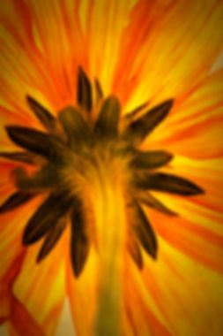 IMG_4230_DAP_Golden_Age.jpg