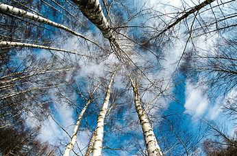 Testimonials Silver Birch.jpg