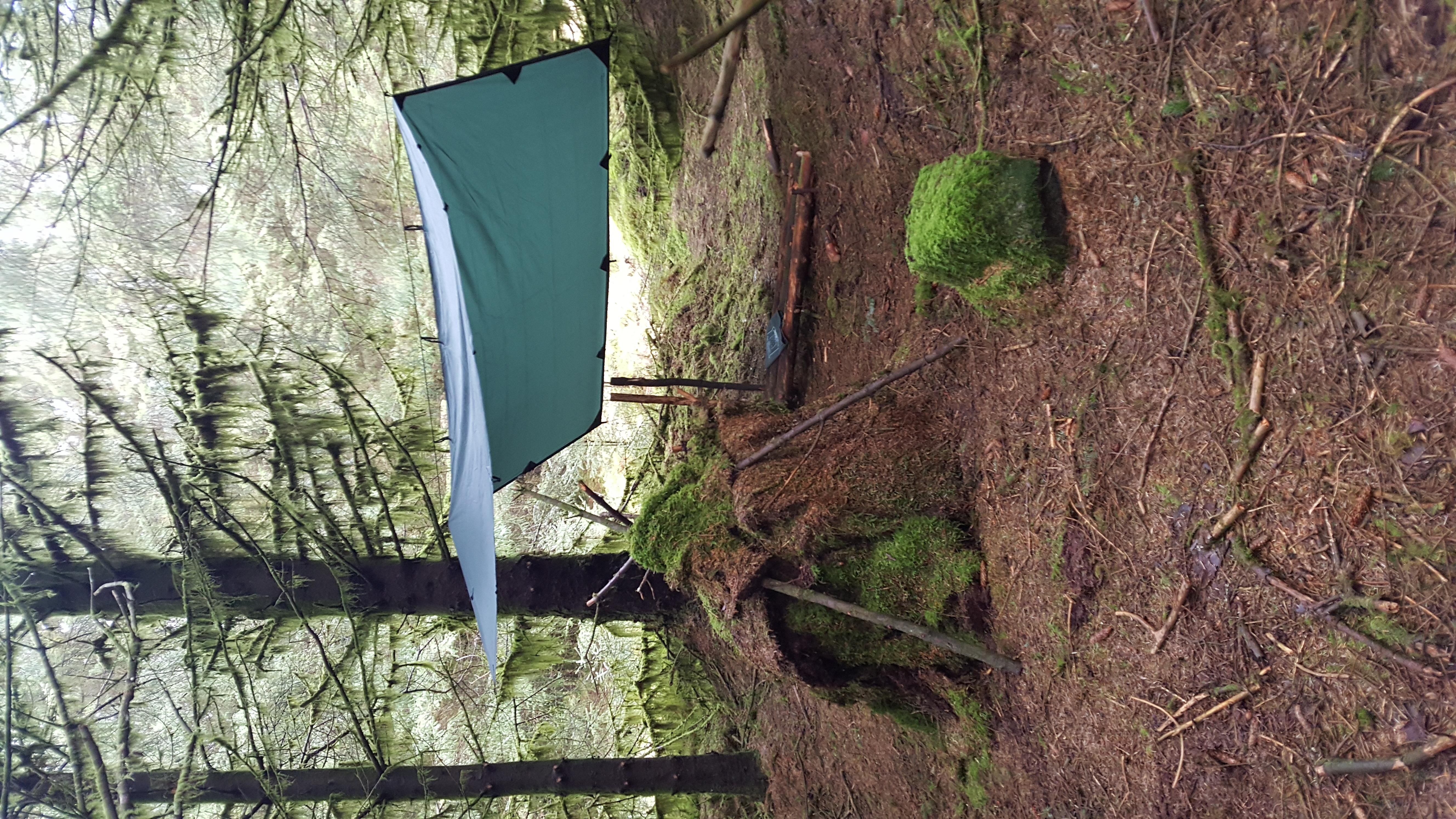 shelter forest