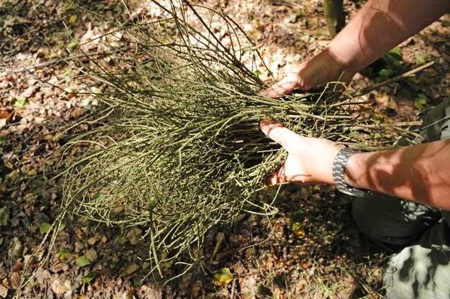 Bundle-of-spruce-twigs-for-kindling_650.jpg
