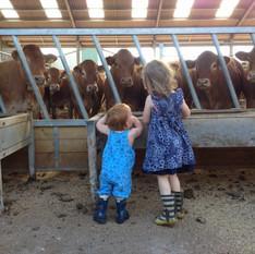 The youngest famiy members talking to the limousi