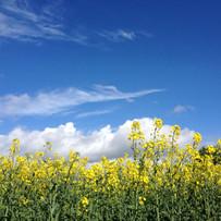 Spring skies over the oilseed rape