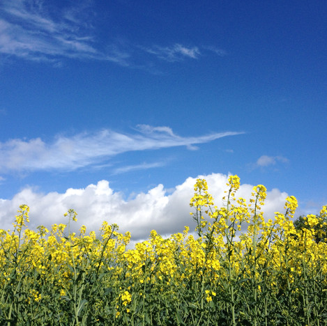 Spring skies over the oilseed rape