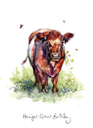 Heifer Great Birthday