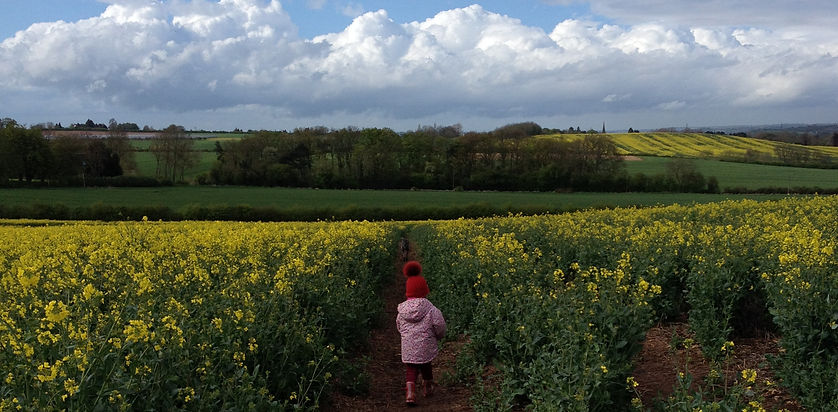 ooilseed rape field whatton farm
