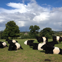 Our Belties, relaxing in the sun