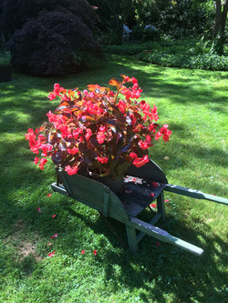 Nantucket flowers and gardening