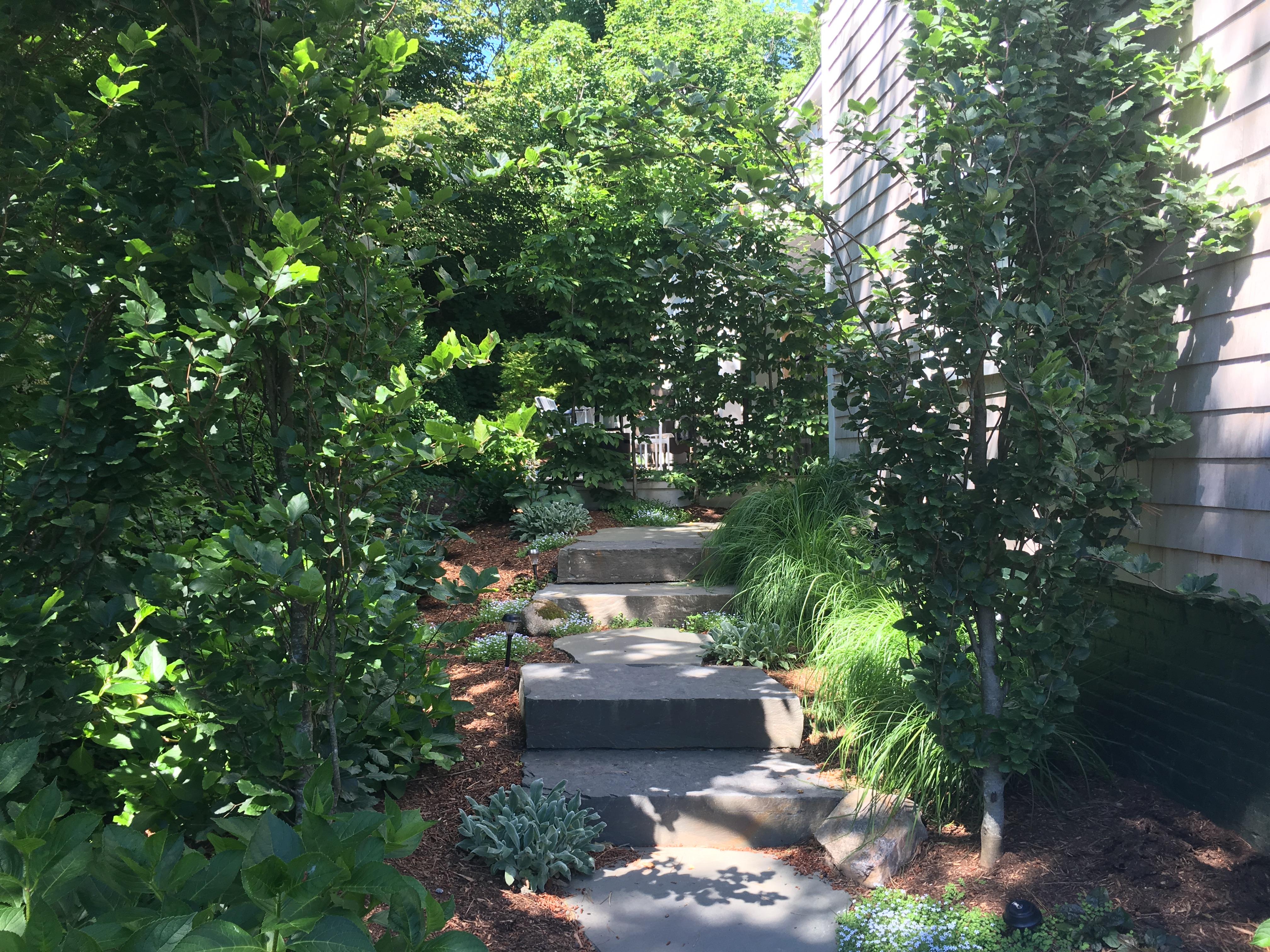 Garden beyond driveway service.