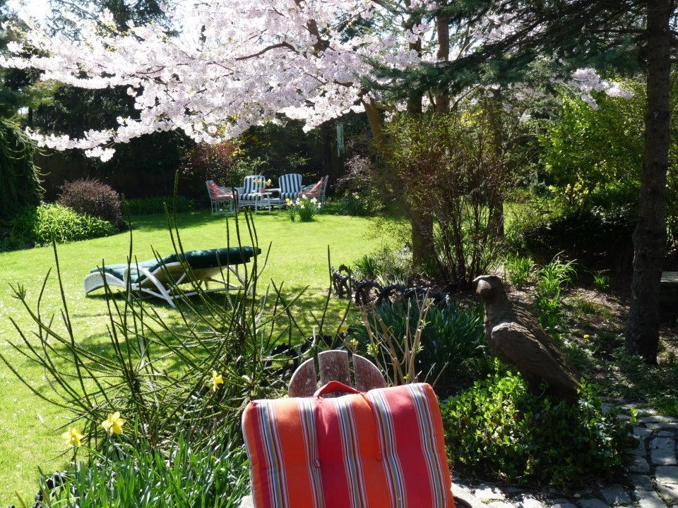 Nantucket cherry trees