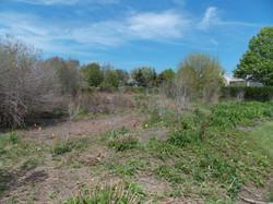 Nantucket Wetlands Revitalization