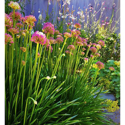 _Gardening imparts an organic perspective on the passage of time