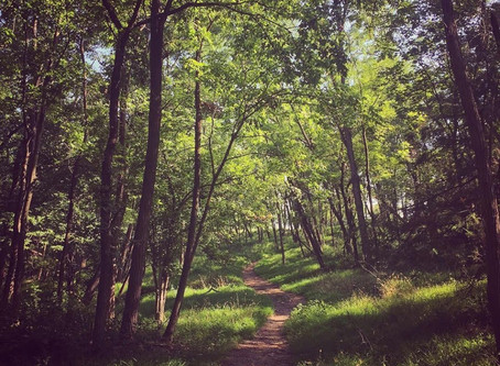 Simple Ways to Experience The Nature Connection