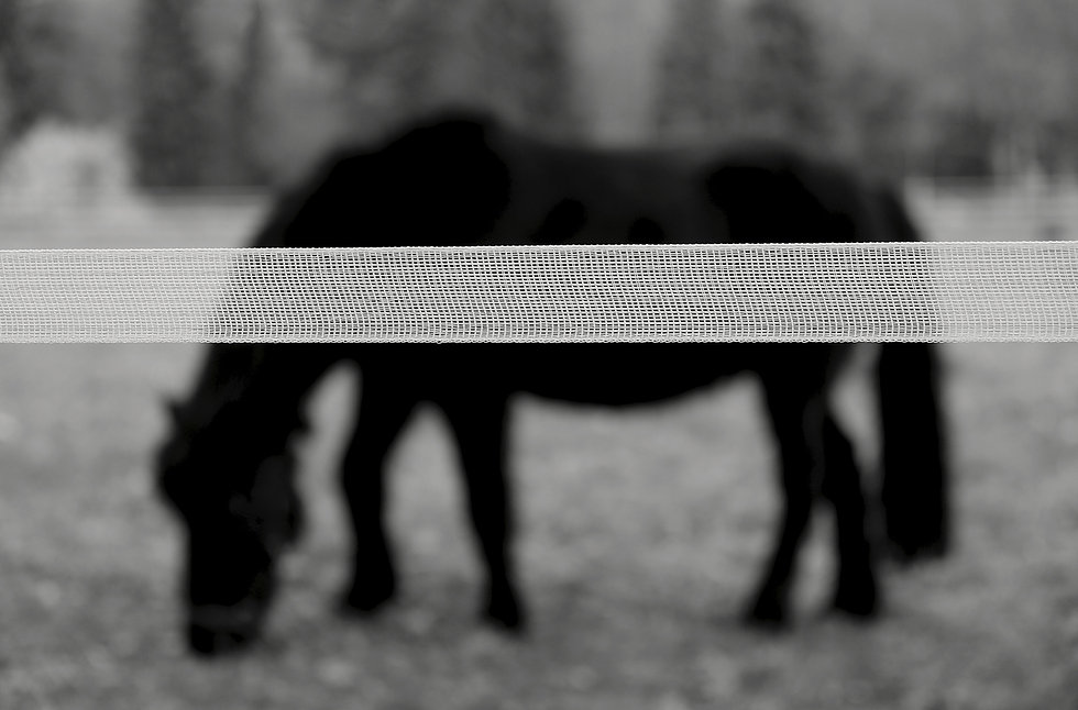 Fenciness horse