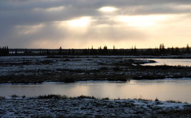 The Tundra  Churchill Manitoba