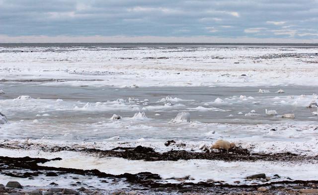 Beached  Churchill Manitoba