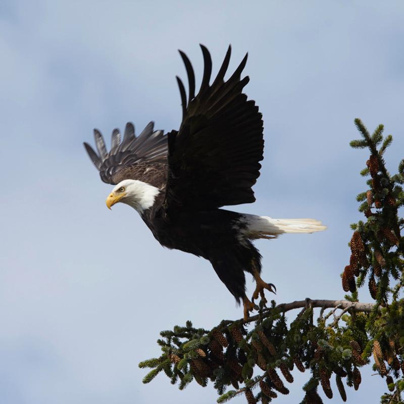 Take Off  Haida Gwaii