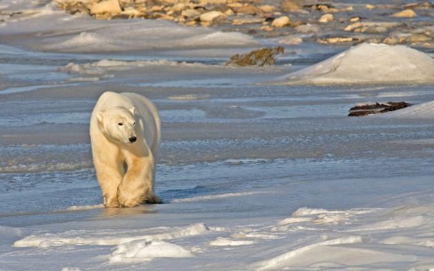 Walking on Ice II  Churchill Manitoba