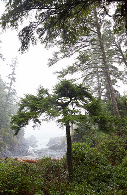 Ucluelet British Columbia  Forest Mist