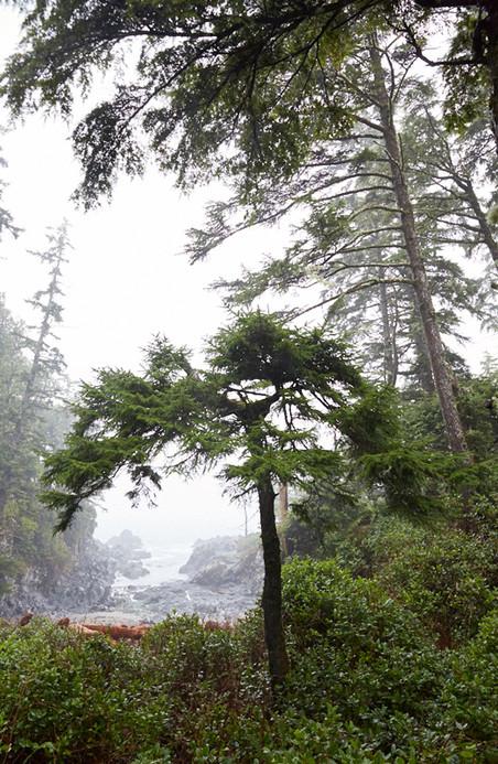 Ucluelet British Columbia  Forest Mist