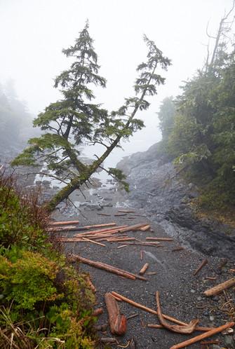 Branches  Tofino Ucluelet British Columbia