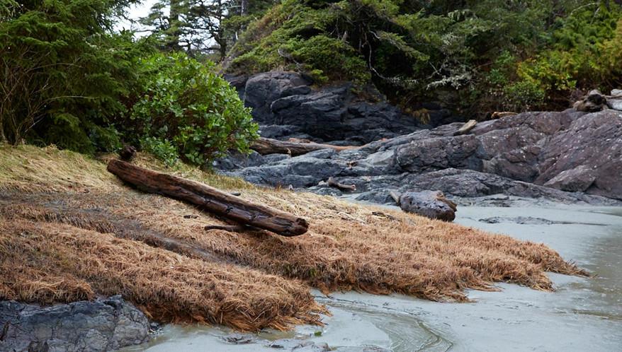 Beached  Tofino Ucluelet British Columbia