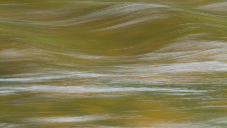 Free Flow  Great Bear Rainforest