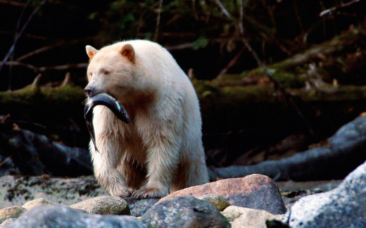 White Bear with Fish