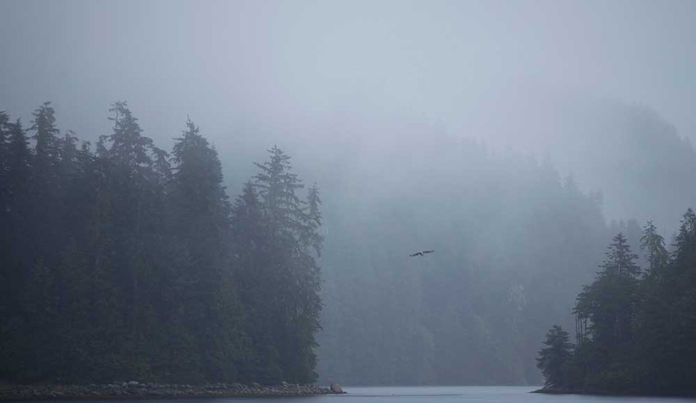 Eagles in the Channel  Great Bear Rainforest