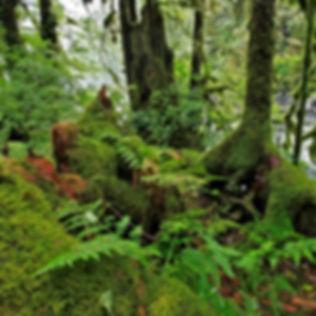Greatbearrainforest-Marni-Grossman-Photo