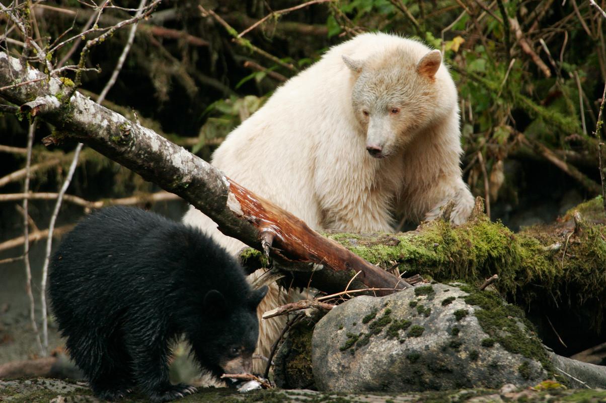 Mom and Cub on Log