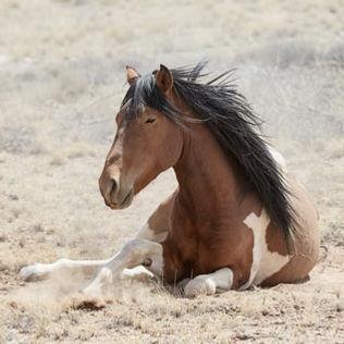Marni-Grossman-Photography-Wild-Horses-N