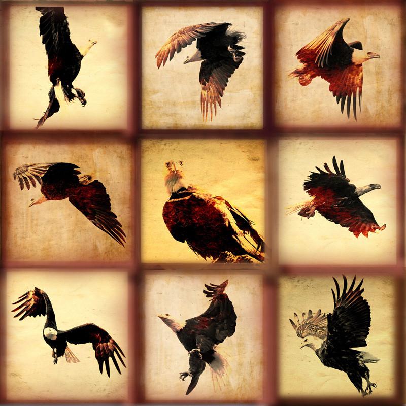 Eagles Series  Haida Gwaii