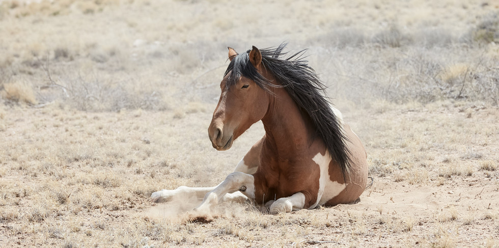 Sunbathing  New Mexico