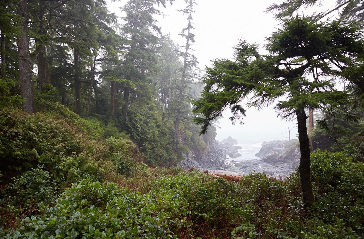 Forest Fog Ucluelet British Columbia